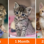 ASPCA Launches New Tool to Educate the Public on How to Help Stray Kittens During Adopt-a-Shelter-Cat Month this June
